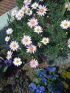 0413flower